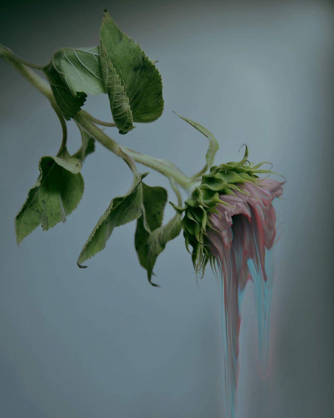 Anna Edholm Art #Anna Edholm#art#glitch#digital art#flowers#plants#pink#green#rose#pale#pastel#drip#trippy#aes#Aesthetic