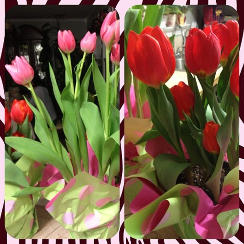 #tulips #red #pink #feelbetter