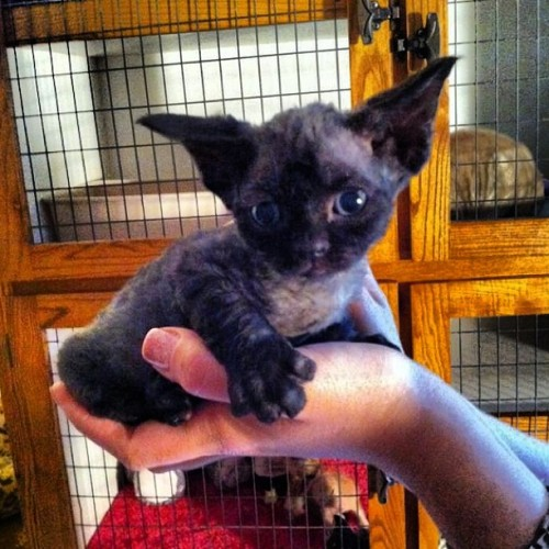 9gag:  My Friends bought a Gremlin/Yoda/Cat…. effin Epic
