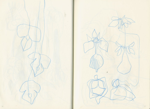 Sketchbook: designs for new types of orchids. #drawing