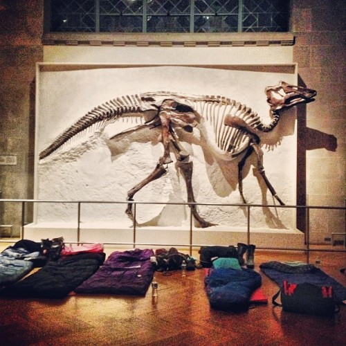 #dinoSNORES, tonight at the Museum! #romsleepover