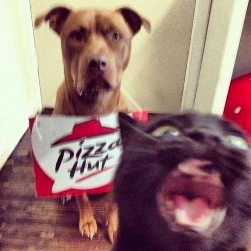 "kittehkats:  ""I said no cheeze!!!"" catsbeaversandducks:   Pizza anyone? Photo via BuzzFeed"