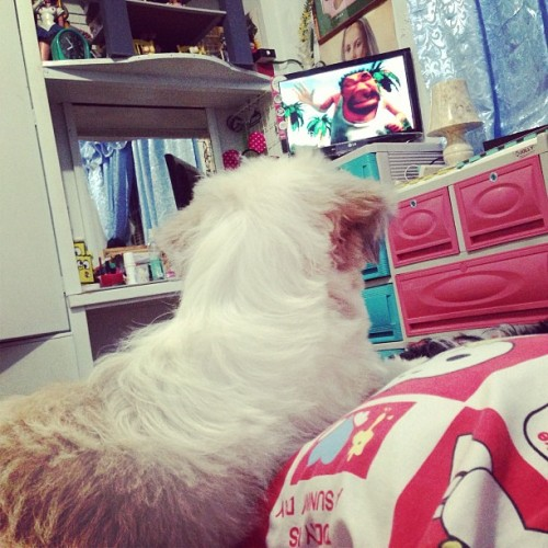 Watching cartoons le  Goldie style. #photooftheday #pet   #dog