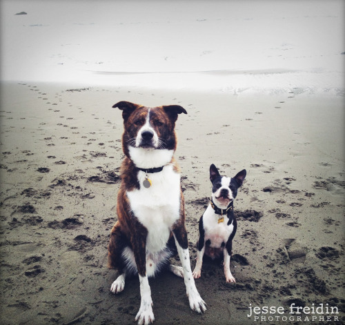 Pancake took his best buddy Meko to Muir Beach over christmas break.