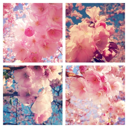 Spring has come!  Photos by me ;9