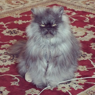 bunnyfood:  (via Colonel Meow)