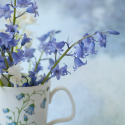Cup of Bluebells by georgianna lane on Flickr.