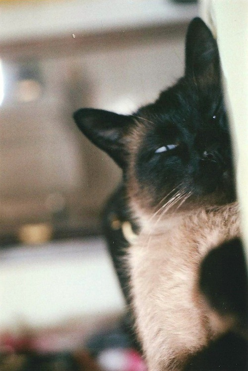 uhdepressed:  Wake up, Bob! by vika. on Flickr.