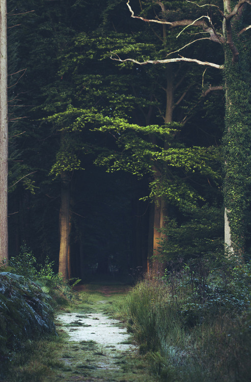 woodendreams:  (by Mathijs Delva)