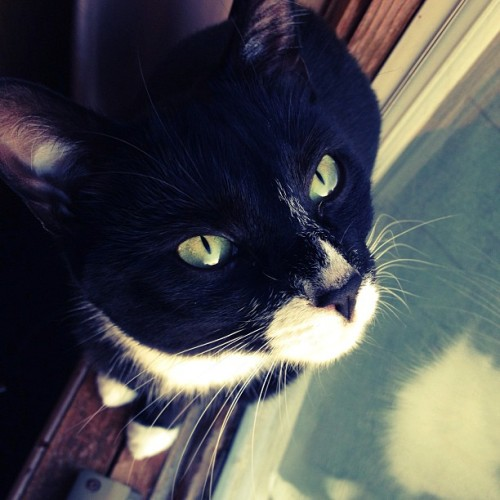 🐱 #baby #luna #cat #kitty #tuxedo #adorable #window #model (at Mount Sinai)