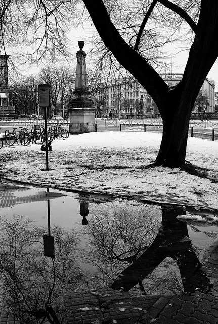 Y a tree?, Strasbourg 2013. I post one last photo of winter, spring's here today in Strasbourg (may be not for long, but let's be optimistic).