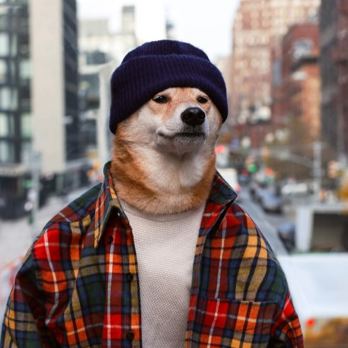 llbean llbeanmoment nyc menswear dog mensweardog menswear dog shiba dapper style influencer stylish themoststylishdogintheworld plaid shirt manly ootd winter look inspo model vibes feels deep thoughts