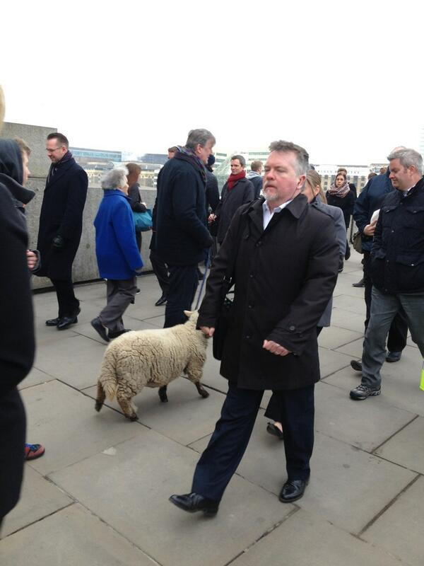 Stephen Fry - When you pass @stephenfry taking his sheep for a walk over #LondonBridge you know it's