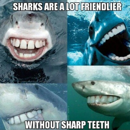 9gag:  Sharks seem a lot friendlier without sharp teeth.