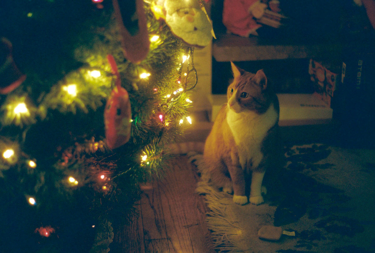 Squeaky and the Christmas tree
