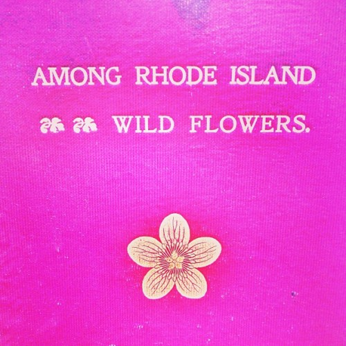 #rhodeisland #ri #wildflowers #pink #gold #book #vintage #brimfield