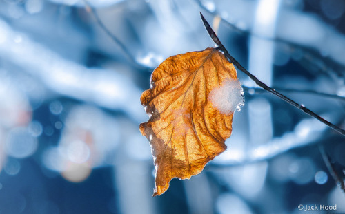 Golden Leaf In Snow on Flickr.