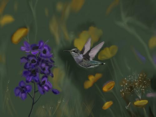 Hummingbird Favorites   Fine Gardening