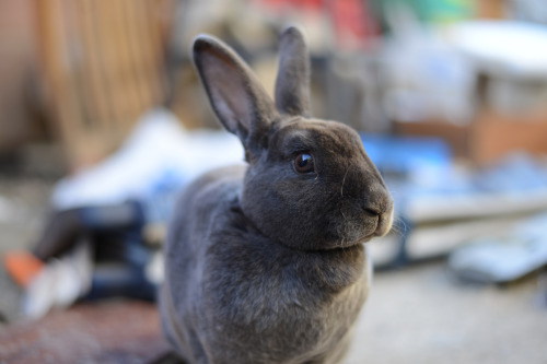 "Bunny Fashion Consultant Lands TV Show Thermo the bunny, known among rabbits for his impeccable fashion sense, has landed a new reality TV pilot with the Bravo channel, according to Deadline.com. Bravo has paid for a full 12-episode run of the show after seeing a 10-minute pilot, writes Deadline reporter Sean Drew. The will follow Thermo as he gives a fashion makeover to two woodland creatures each episode. The pilot, which is being expanded to become the first episode, apparently features Thermo buying a new wardrobe for a fashion-challenged black bear. ""According to insiders, there is a lot of dramatic tension between the bunny and the bear. Will he eat him? Won't he? That sort of thing,"" writes Drew. The show is casting now and will begin shooting in the Los Angeles area next month for a Fall debut. Via Themgo23."