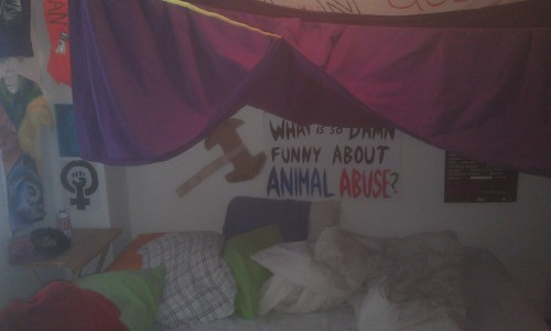 Welcome to my room. There is always fort time now.