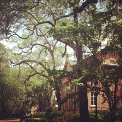 soroyalty:  alexandra—m:  Visiting @djpfeify (at College of Charleston)