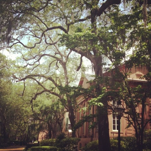 alexandra—m:  Visiting @djpfeify (at College of Charleston)