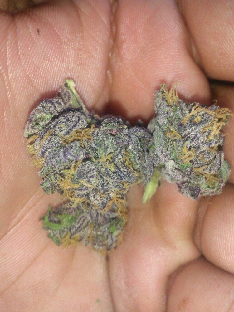 my boy got a pound of this and all the nugs were purp like these ones