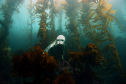animals underwater nature amazing underwater photography wildlife ocean sea seal seascape Aquatic sea life kelp harbor seal kelp forest