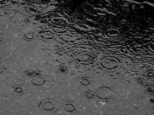 "scinerds:  What Makes Rain Smell So Good?By Joseph Stromberg  Step outside after the first storm after a dry spell and it invariably hits you: the sweet, fresh, powerfully evocative smell of fresh rain. If you've ever noticed this mysterious scent and wondered what's responsible for it, you're not alone. Back in 1964, a pair of Australian scientists (Isabel Joy Bear and R. G. Thomas) began the scientific study of rain's aroma in earnest with an article in Nature titled ""Nature of Agrillaceous Odor."" In it, they coined the term petrichor to help explain the phenomenon, combining a pair of Greek roots: petra(stone) and ichor (the blood of gods in ancient myth). In that study and subsequent research, they determined that one of the main causes of this distinctive smell is a blend of oils secreted by some plants during arid periods. When a rainstorm comes after a drought, compounds from the oils—which accumulate over time in dry rocks and soil—are mixed and released into the air. The duo also observed that the oils inhibit seed germination, and speculated that plants produce them to limit competition for scarce water supplies during dry times. These airborne oils combine with other compounds to produce the smell. In moist, forested areas in particular, a common substance is geosmin, a chemical produced by a soil-dwelling bacteria known as actinomycetes. The bacteria secrete the compound when they produce spores, then the force of rain landing on the ground sends these spores up into the air, and the moist air conveys the chemical into our noses. ""It's a very pleasant aroma, sort of a musky smell,"" soil specialist Bill Ypsilantis told NPR during an interview on the topic. ""You'll also smell that when you are in your garden and you're turning over your soil."" Because these bacteria thrive in wet conditions and produce spores during dry spells, the smell of geosmin is often most pronounced when it rains for the first time in a while, because the largest supply of spores has collected in the soil. Studies have revealed that the human nose is extremely sensitive to geosmin in particular—some people can detect it at concentrations as low as 5 parts per trillion. (Coincidentally, it's also responsible for the distinctively earthy taste in beets.) Ozone—O3, the molecule made up of three oxygen atoms bonded together—also plays a role in the smell, especially after thunderstorms. A lightning bolt's electrical charge can split oxygen and nitrogen molecules in the atmosphere, and they often recombine into nitric oxide (NO), which then interacts with other chemicals in the atmosphere to produce ozone. Sometimes, you can even smell ozone in the air (it has a sharp scent reminiscent of chlorine) before a storm arrives because it can be carried over long distances from high altitudes. But apart from the specific chemicals responsible, there's also the deeper question of why we find the smell of rain pleasant in the first place. Some scientists have speculated that it's a product of evolution. Anthropologist Diana Young of the University of Queensland in Australia, for example, who studied the culture of Western Australia's Pitjantjatjara people, has observed that they associate the smell of rain with the color green, hinting at the deep-seated link between a season's first rain and the expectation of growth and associated game animals, both crucial for their diet. She calls this ""cultural synesthesia""—the blending of different sensory experiences on a society-wide scale due to evolutionary history. It's not a major leap to imagine how other cultures might similarly have positive associations of rain embedded in their collective consciousness—humans around the world, after all, require either plants or animals to eat, and both are more plentiful in rainy times than during drought. If this hypothesis is correct, then the next time you relish the scent of fresh rain, think of it as a cultural imprint, derived from your ancestors.  Original Article"