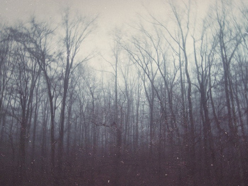 mykindafairytalee:  untitled by deakrostochil on Flickr.