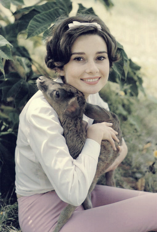 Audrey Hepburn and pet deer.