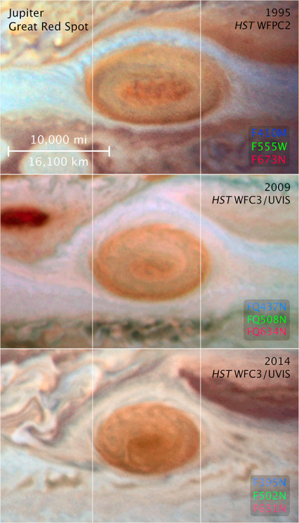 """La Grande Macchia Rossa è sempre meno grande [[MORE]] Tutto ciò che ha a che fare con Giove è immenso. Il suo diametro equatoriale, per esempio: 142.984 chilometri, 11,2 volte quello della Terra. Le sue caratteristiche climatiche ovviamente non sono da meno: i venti soffiano a centinaia di chilometri orari, le tempeste sono gigantesche e, a differenza di quelle terrestri, sembrano destinate a non finire mai, perché non c'è sotto una superficie solida che ne disperda l'energia. Una di queste tempeste, in particolare, è nota da secoli: la Grande Macchia Rossa, un vortice anticiclonico visibile nell'emisfero meridionale del pianeta.Tuttavia l'evoluzione recente di questa tempesta sembra contraddire le patenti di perennità e di immensità che le sono state finora con ragione associate. Vi sono infatti prove indubitabili che la Grande Macchia Rossa si sta rapidamente rimpicciolendo. Se, verso la fine dell""""800, il diametro massimo del vortice misurava circa 41.000 chilometri, abbastanza cioè da contenere comodamente tre volte la Terra, un secolo dopo le immagini delle sonde Voyager mostravano che il diametro si era ridotto a soli 23.335 chilometri, poco più della metà. Negli ultimi anni il ritmo di assottigliamento dell'iconica tempesta gioviana è stato misurato in circa mille chilometri all'anno. Le più recenti immagini acquisite con il telescopio spaziale Hubble mostrano la Grande Macchia Rossa al suo minimo storico, con un diametro di """"appena"""" 16.500 chilometri. Anche la forma è cambiata, virando gradualmente da un ovale a un cerchio. Gli astronomi sono perplessi da questi repentini cambiamenti. Ciò che le immagini di Hubble mostrano è che i vortici più chiari che circondano la tempesta sono diventati via via più deboli e sottili dal 1995 ad oggi. È probabile dunque che la Macchia stia rimpicciolendo perché meno """"nutrita"""" che in passato. Si tratta, però, di una teoria per ora puramente congetturale, che necessita di uno studio approfondito delle dinamiche che regolano l"""