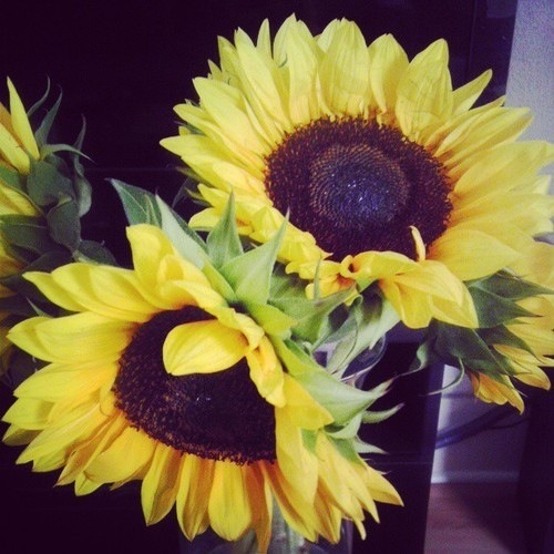 fashion-d0lly:  sunflowers are so cute
