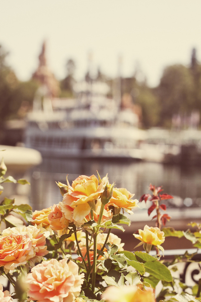 disneymedley:  just around the riverbend (by huffmans)