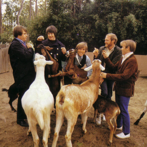 youngmansorrow:  The Beach Boys