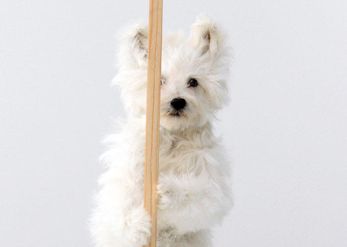 David Shrigley I'm Dead, (detail) 2011 Taxidermy puppy with wooden sign and acrylic paint  36 x 28 x 28 inches