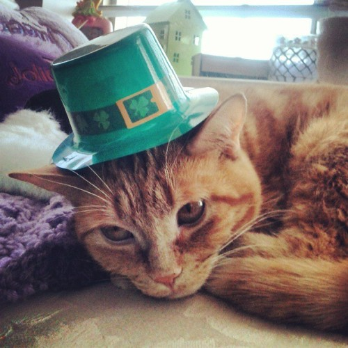 Even Stella is getting in the mood to celebrate St Patrick's Day! #stpaddysday #stpatricksday #catsofinstagram #catsofinstagram #cute #kissmeimirish #Irishforaday #Irish #green #kitten #orangetabby #instapets #instagood