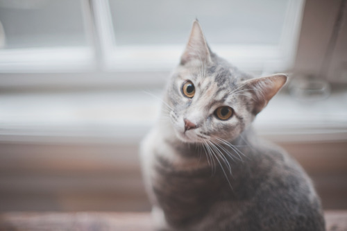 theanimalblog:  ^ ^ (by *Cinnamon)    //