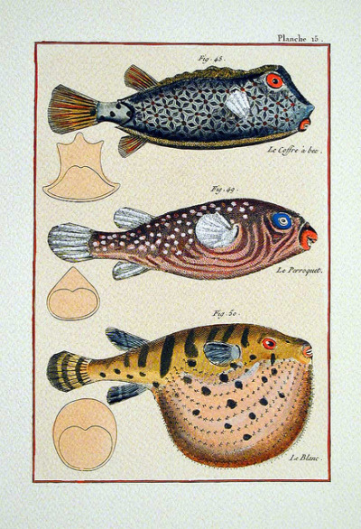 wapiti3:  Fishes of XVIII century on Flickr.