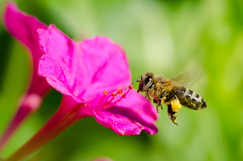 Why you should be more worried about pollination than a bee sting Bees don't want to sting you. They have far more important things to do, like keep our agriculture system afloat.