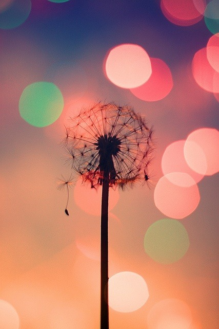 crazy-until-we-see-the-sun:  bokeh dandelion…amazing! | Art & Photography on We Heart It. http://weheartit.com/entry/59575517/via/weheartit