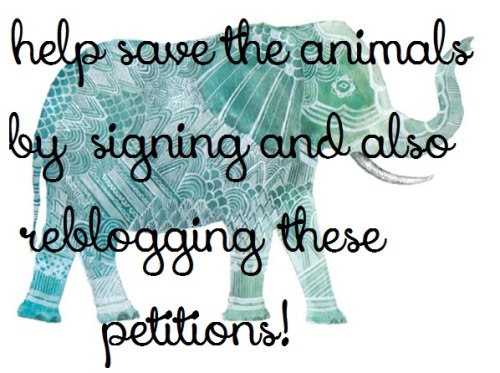 fitness-and-diet:  Please, I beg you to sign and share these petitions to help save the animals. Animal walfare petitions Animal abuse petitions Tell coca cola to stop sponsoring dog races Stop the suffering of dairy cows Stop experimenting on cats Stop horse cruelty in Mexico Stop Ban Canned hunting: also referred to as fenced-in shooting preserves. End dog racing in Macau: nearly 400 dogs killed every year! Say no to cayuga heights NY's deer killing plan Help stop bull fighting Stop the slaughter of wolves in Montana Ban shark finning in texas Speak out against Walmart's cruelty to pigs End cruel, unsporting fox pens in Virginia. Texas: stop killing wild burros! Stop puppy mill from being built in Gorham, NY Domino's Pizza: stop making pigs suffer! Stop selling dolphin and whale meat Stop shipping pigs from the mainland U.S to Hawaii for slaughter Stop the abuse at the Memphis animal shelter Stop animal cruelty End the killings of prairie dogs in Calorado End bullfighting world wide Stop supporting animal abuse! Help stop dog fighting Stop de-clawing felines Pledge to boycott china for animal cruelty and demand animal abuse laws! Stop de-horning rhinos! Pledge to stop eating shark fin products! L'oreal: stop animal testing and using animal ingredients! Ban against breed descrimination Stop selling wild horses for slaughter Stop supporting elephant abuse Nike: stop slaughtering kangaroos to make soccer shoes. Policemen: stop using deadly force on family pets! Ikea, taco bell, and burger king: keep horses out of our food! No more lion burgers, stop lion meat sale. Free pets from cruelty Outlaw bobcat trapping in California! Help protect endangered sea turtles in Mexico. Stop putting whales in danger! Help animals in the pet shelters Stop horrific dog meat trade in China Take the pledge to stop animal cruelty Justice for pit bulls murdered by police Boycott kerala tourism to save animals from slaughter Stop horrific dog meat trade in South Korea Stop using elephants as bulldozers Stop tiger hunting! Tell south korea to stop boiling cats and dogs alive Call to an end live animal exports Save Washington's wolves Stop animal cruelty on china's fur farms Stop animal testing! Stop dog fighting in Indonesia Stop seal slaughter in our world Stop wolf hunting Nationwide law banning of puppy mills Stop cattle slaughter in India STOP THE LIVE SKINNING OF ANIMALS Stop horse slaughter, stop horse slaughter (2) Stop shooting innocent wolves Tell shell to stay out of the Arctic Protect the wolves in California