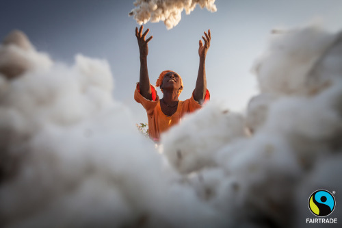 Kady Waylie, a cotton farmer in Sitaoulé Bananding, Senegal, throws freshly picked cotton onto a heap. The harvest is a celebration that marks the end of a season's hard work. Photo by Sean Hawkey, who has a photo exhibition coming up in Dublin for Fairtrade Fortnight. Check out all the Fairtrade Fortnight activities throughout the UK and Ireland!