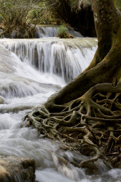bluepueblo:  Waterfall Roots, Laos photo by adrienne