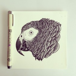 Finished! African Grey (well done to all who guessed right..easy). Your thoughts?