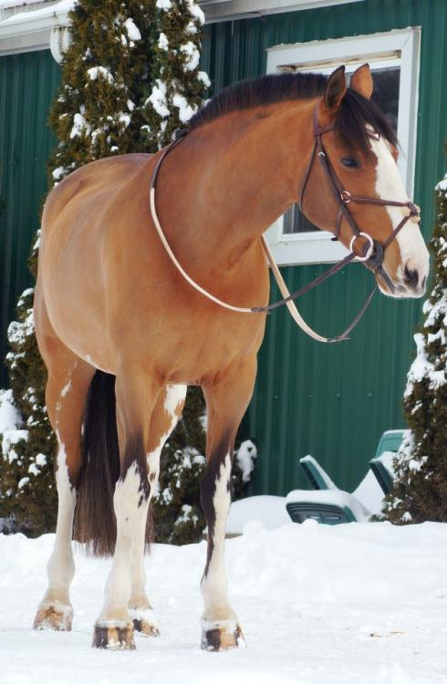 horse-tack:  Aquaa All rights reserved to Avery Sharp