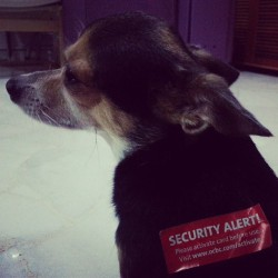 And I labelled him a security alert.