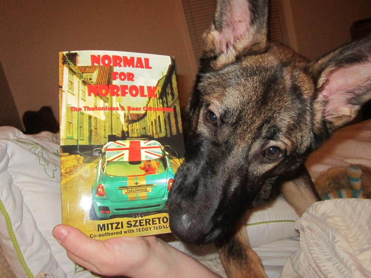 NORMAL FOR NORFOLK (THE THELONIOUS T. BEAR CHRONICLES) is going to the dogs! http://mitziszereto.com/normalfornorfolk/