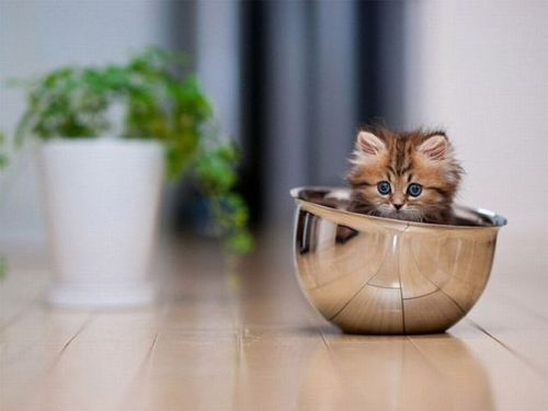 fuckyeahcuteanimalss:  (via Just mixing up a bowl of adorable…)