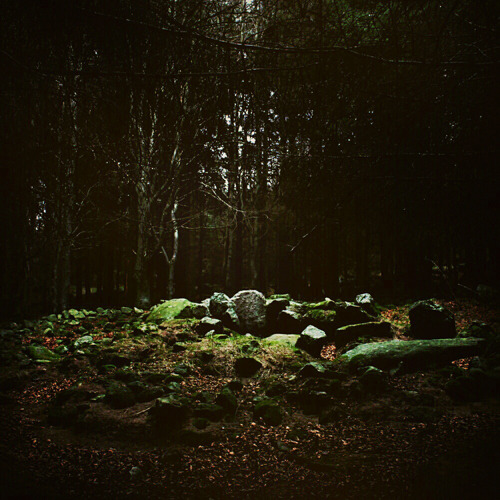 A Bronze Age wedge tomb hidden in the forest which nature is slowly reclaiming